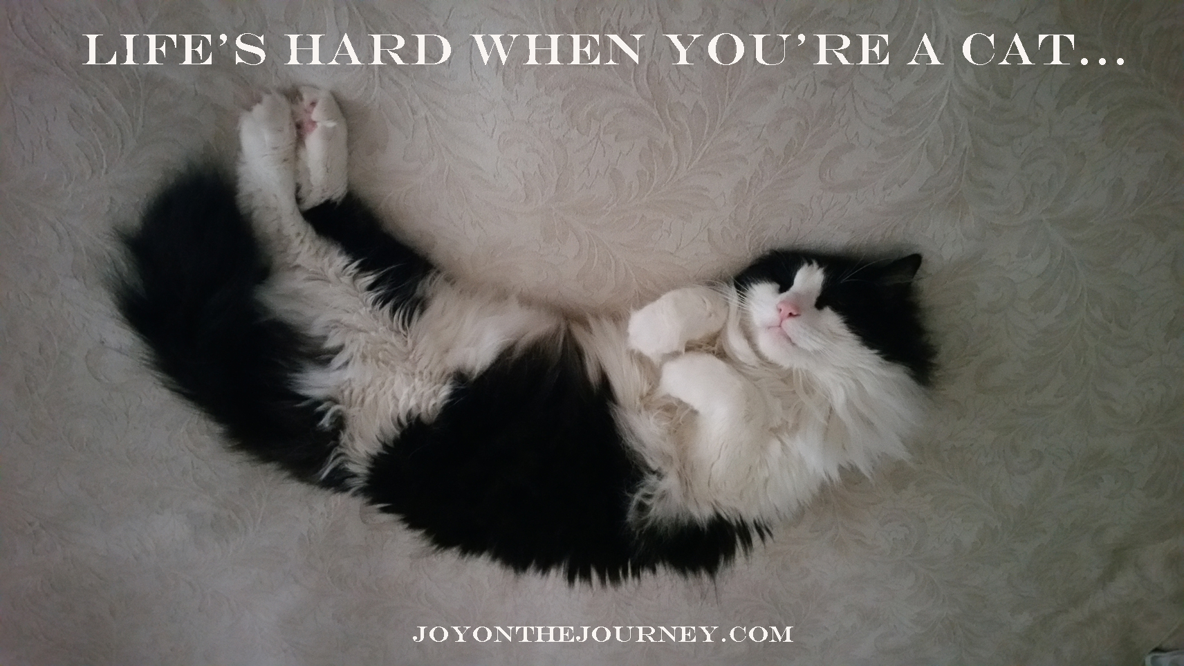 Life's-Hard-When-You're-A-Cat_JoyOnTheJourney.com